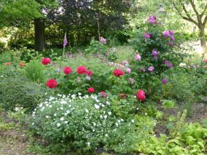Un jardin fleuri pour les abeilles