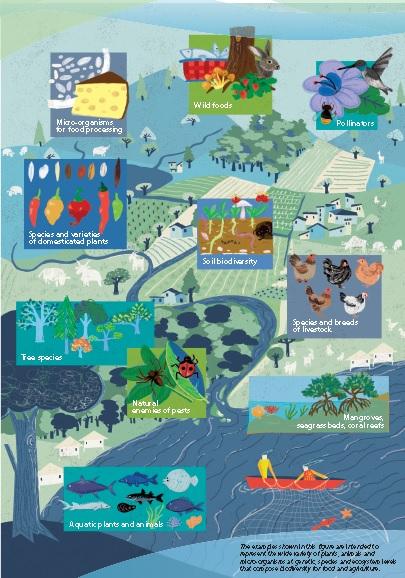 Une grande variété de plantes, d'animaux et de micro-organismes compose la Biodiversité pour l'Alimentation et l'Agriculture